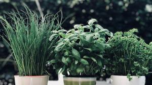 Hierbas aromáticas para cocinar
