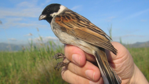 Imagen de un ejemplar de este tipo de pájaro