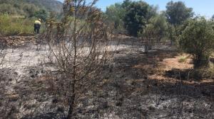 Imatge de l'incendi de vegetació que ha afectat el voral de la C-242, a Alforja