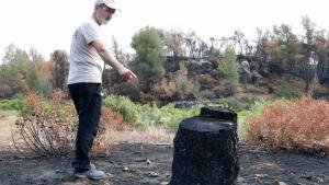 Imatge de Pere Josep Jiménez, del Grup de Natura Freixe, mostrant una soca socarrimada per l'incendi