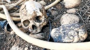 Imatge dels cranis trobats a Gimenells