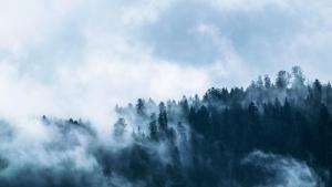 La masa forestal solamente representa un 0,5% del territorio islandés