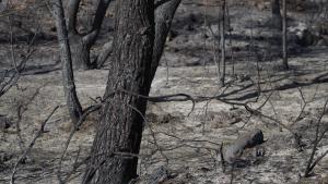 Les imatges de l'incendi forestal a la Ribera d'Ebre, controlat i a punt de ser extingit