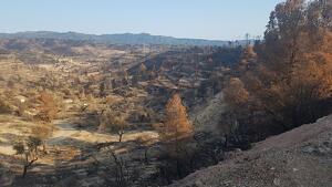 Les muntanyes entre la Torre de l'Espanyol, Vinebre, Flix i la Palma d'Ebre van quedar molt afectades