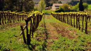 Les vinyes i altres arbres fruiters es podrien veure afectats per l'insecte