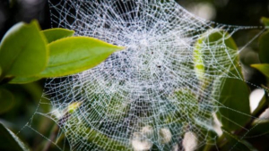 L'insecte va ser descobert al Parc Nacional d'Andasibe-Mantadia