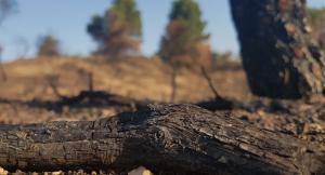 Més de 5.000 hectàrees es van cremar en l'incendi afectant tres comarques