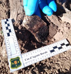 Mostra del verí utilitzat per la persona denunciada a les valls del Sió-Llobregós