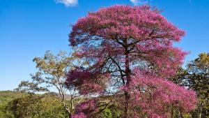 Palo de rosa: usos del aceite esencial y propiedades del linalool