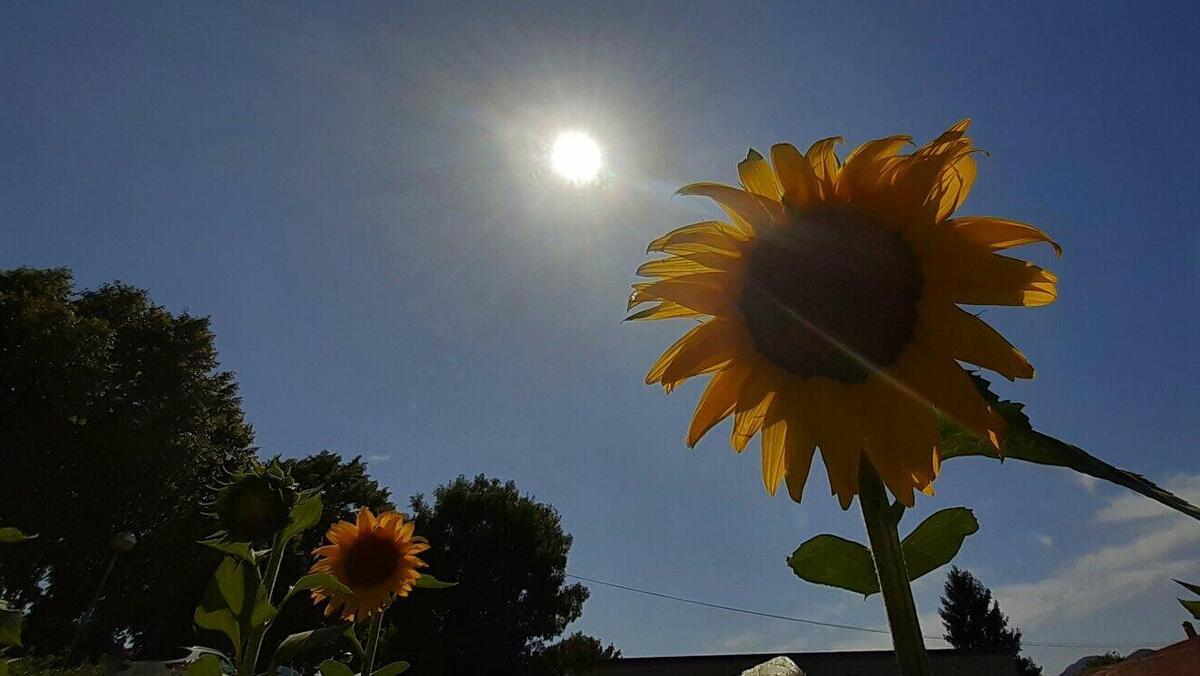 El sol radiant i la calor intensa seran els protagonistes del primer cap de setmana d'agost