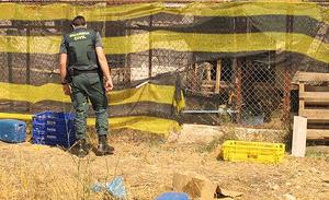 Alguns dels animals deambulaven per l'exterior de la finca, ja que el recinte no tenia un tancat efectiu