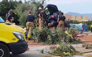 El conductor del vehicle ha sortit de la via i ha topat amb una olivera de la rotonda