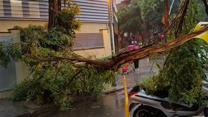 El fort vent ha tombat diversos arbres per la tempesta