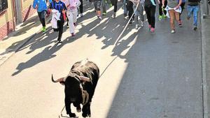 Festejo del toro enmaromado de Yuncos