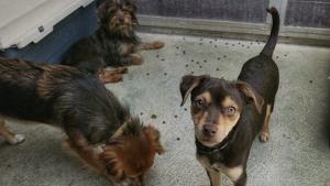 Gossos rescatats