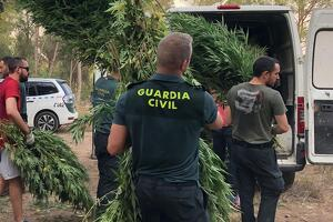 Guardia Civil Marihuana