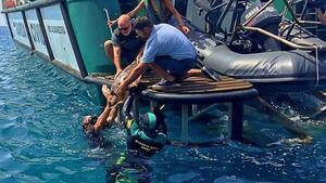 Imagen del momento en el que la tortuga fue devuelta al mar