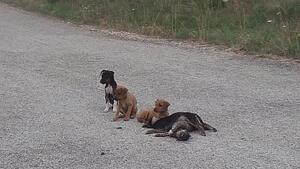 Imatge dels cinc cadells abandonats a Querol, dos d'ells, morts.