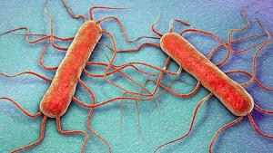 La bacteria 'Listeria monocytogenes' causa listeriosis