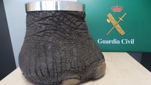 La Guàrdia Civil ha incautat una pota d'elefant que un veí de Reus venia per Internet