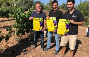 La primera Festa de la Verema ha estat presentada pel president de la DO Tarragona en una vinya dels Cellers Blanch, a Puigpelat