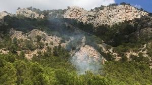 L'incendi ha afectat una zona de pins situada a uns cent metres de la T-333