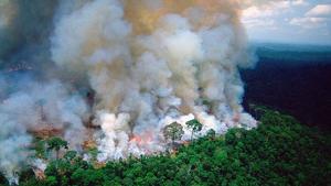 Los incendio en la Amazonia se han multiplicado en este último año