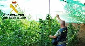 Pla obert on es pot veure un agent de la Guàrdia Civil al costat de la plantació