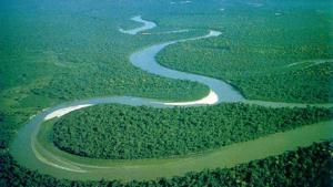Selva amazònica peruana