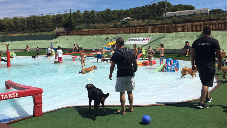 gos piscina