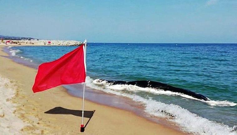 Imatge de la balena morta a la platja de Mataró