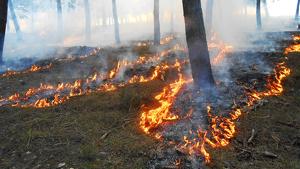 El foc promou que en molts ecosistemes hi hagi més varietat d'espècies animals i vegetals
