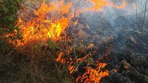 En total s'han cremat uns 100 m² de vegetació