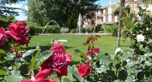 Fotografia d'algunes plantes i flors del Parc del Terrall de les Borges Blanques