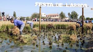La Festa de l'Arròs de Deltebre, tot un èxit un any més