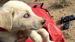 Rescaten cinc cadells enterrats vius a Alguaire