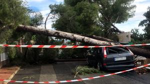 Un cotxe aixafat per un pi tombat pel vent a la urbanització Pallaresos Park.