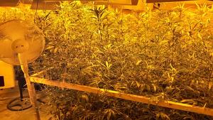 Una imatge de la plantació de marihuana enxampada al Catllar.