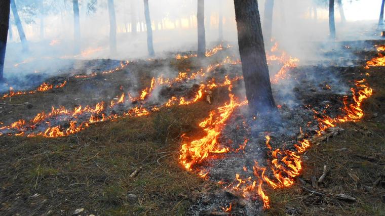 Els boscos mediterranis adopten estratègies que són clau per a la seva recuperació després d'un foc