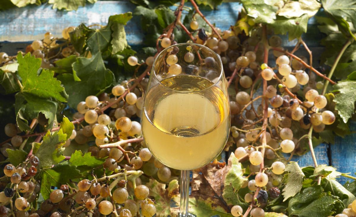 La malvasia és una de les varietats de raïm de les comarques de Barcelona
