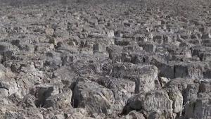 Animals morts degut a la falta d'aigua a Xile