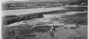 Coma-ruga, quan era una zona d'aiguamolls i estanys naturals.