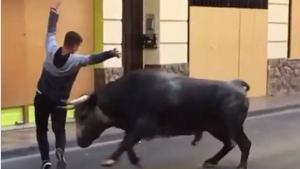 El primer bou de la vesprada de les festes taurines de Puçol d'octubre del 2020