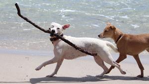 Els gossos ja no poden accedir a la majoria de platges del territori.