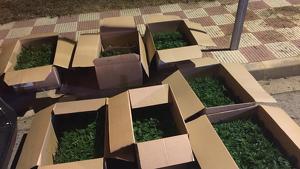 Els homes transportaven quasi tres tones de marihuana en capses