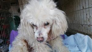 Imatge del gos abandonat a Lleida