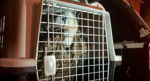 Imatge del voltor rescatat
