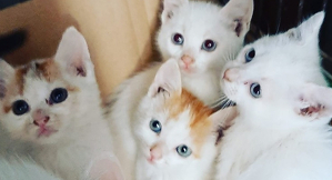 Imatge dels gats abandonats