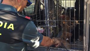 La Guàrdia Civil troba onze cadells de gos abandonats a Tortosa