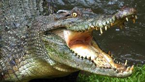 Los ataques de cocodrilos se están convirtiendo en un problema en el área del río Deka, en Zimbabue